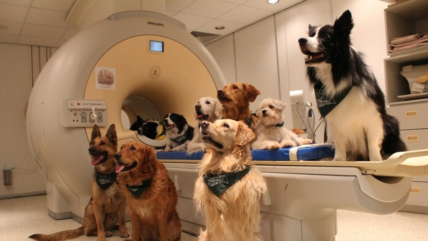 Trained dogs by the scanner.