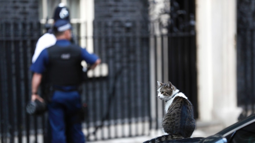 Larry, resident cat of 10 Downing Street sits on one of the cars used by Britain's Prime Minister Theresa May in Downing Street in central London, Britain September 22, 2016. (REUTERS/Stefan Wermuth)