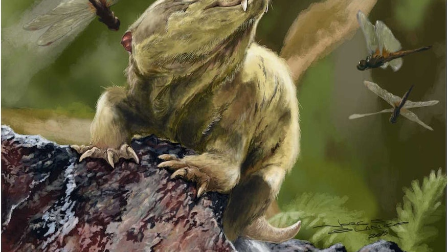 An artistic interpretation of what the newly identified cynodont Bonacynodon schultzi looked like during its lifetime about 235 million years ago during the Triassic.