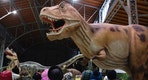 "Children watch a life-sized Tyrannosaurus Rex dinosaur model in Vienna February 7, 2014. The travelling exhibition ""World of Dinosaurs"" shows some 50 life-sized dinosaur models and runs in Vienna until February 23. REUTERS/Heinz-Peter Bader  (AUSTRIA - Tags: SCIENCE TECHNOLOGY SOCIETY) - RTX18CGU"
