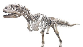 The fearsome <em>Majungasaurus crenatissimus</em> is one of the slowest growing dinosaurs of its kind on record.