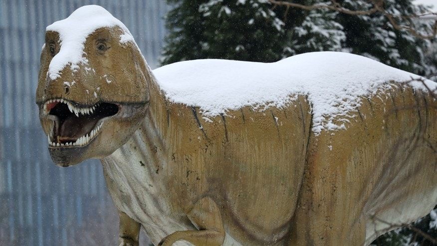A snow covered T-Rex life size dinosaur sculpture is pictured at the Senckenberg Natural History Museum in Frankfurt, Germany, January 10, 2017. (REUTERS/Kai Pfaffenbach)