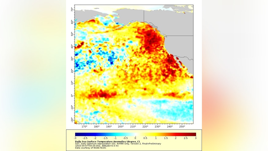 """The """"warm blob,"""" seen in April 2015, squished up against the West Coast. The scale bar is in degrees Celsius (each increment is 1.8 degrees Fahrenheit)."""