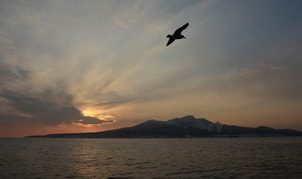 A seagull flies above the waters of the Pacific Ocean near the Island of Kunashir, one of four islands known as the Southern Kuriles in Russia and the Northern Territories in Japan, December 20, 2016. REUTERS/Yuri Maltsev - RTX2VUPW