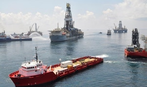 Scientists find dozens of new species in Gulf of Mexico after Deepwater Horizon oil spill