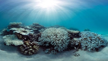 This May 2016 photo released by The Ocean Agency/XL Catlin Seaview Survey shows coral that has bleached white due to heat stress in the Maldives. Coral reefs, unique underwater ecosystems that sustain a quarter of the world's marine species and half a billion people, are dying on an unprecedented scale. Scientists are racing to prevent a complete wipeout within decades. (The Ocean Agency/XL Catlin Seaview Survey via AP)