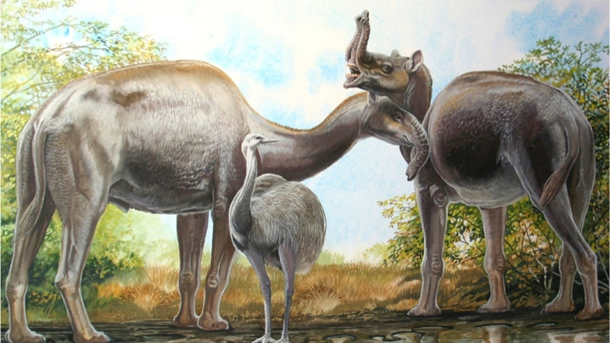 An artist's rendering shows the South American native ungulate Macrauchenia patachonica which had a number of remarkable adaptations, including the positioning of its nostrils high on its head in this illustration released on March 17, 2015. This implies that Macrauchenia may have had a mobile proboscis, as pictured here. (REUTERS/Peter Schouten/Handout)
