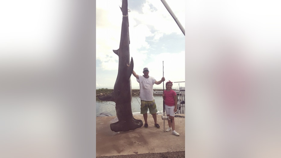 Tim McClellen brought in the massive, record-breaking hammerhead shark at the Texas City Jaycees fishing tournament Sunday.