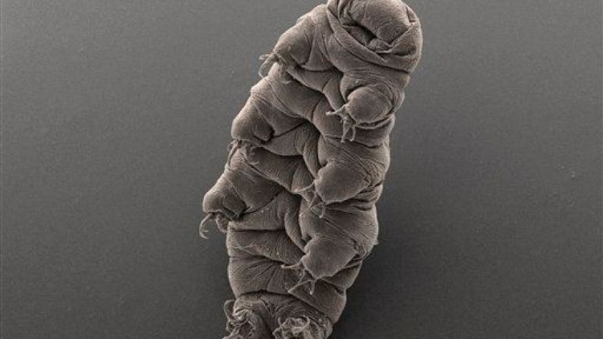 Earth's Most Indestructible Creature Identified: Tardigrade
