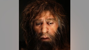 Hyperrealistic face of a neanderthal male is displayed in a cave in the new Neanderthal Museum in the northern Croatian town of Krapina February 25, 2010.  The Neanderthal Museum opened last week and was built on the site where scientists have found the greatest concentration in Europe of Neanderthal remains, the bones, skulls, tools and other effects of an extinct offshoot of mankind who inhabited parts of Asia and Europe until 30,000 years ago. Picture taken February 25, 2010.  To match Reuters Life! NEANDERTHAL-CROATIA/MUSEUM  REUTERS/Nikola Solic (CROATIA - Tags: SOCIETY) - RTR2B3E5