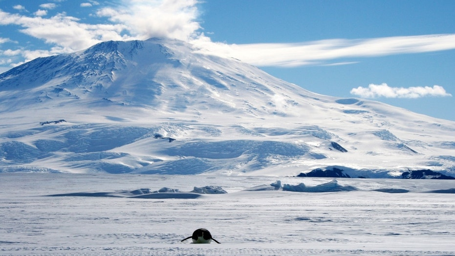 "File photo: A lone foraging emperor penguin ""toboggans"" on its belly across the frozen Ross Sea, with the live volcano Mount Erebus in the background, off Ross Island, Antarctica, December 9, 2006. (REUTERS/Deborah Zabarenko)"