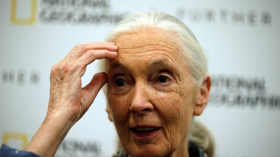 File photo: Conservationist and primatologist Jane Goodall speaks during a news conference at the National Geographic summit in Lisbon, Portugal May 25, 2017. (REUTERS/Rafael Marchante)