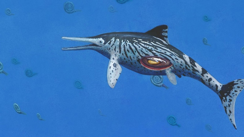 ARTIST IMPRESSION OF PREGNANT ICHTHYOSAURUS. (CREDIT: COPYRIGHT OF JOSCHUA KNÜPPE)