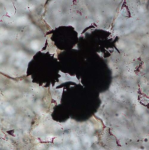 Oldest evidence of life found in 3.95-billion-year-old rocks