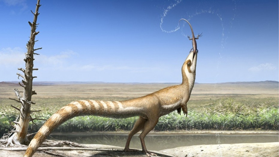 Sinosauropteryx's plumage pattern suggests it lived in an open habitat 130 million years ago (artist's impression). (Credit: Robert Nicholls)