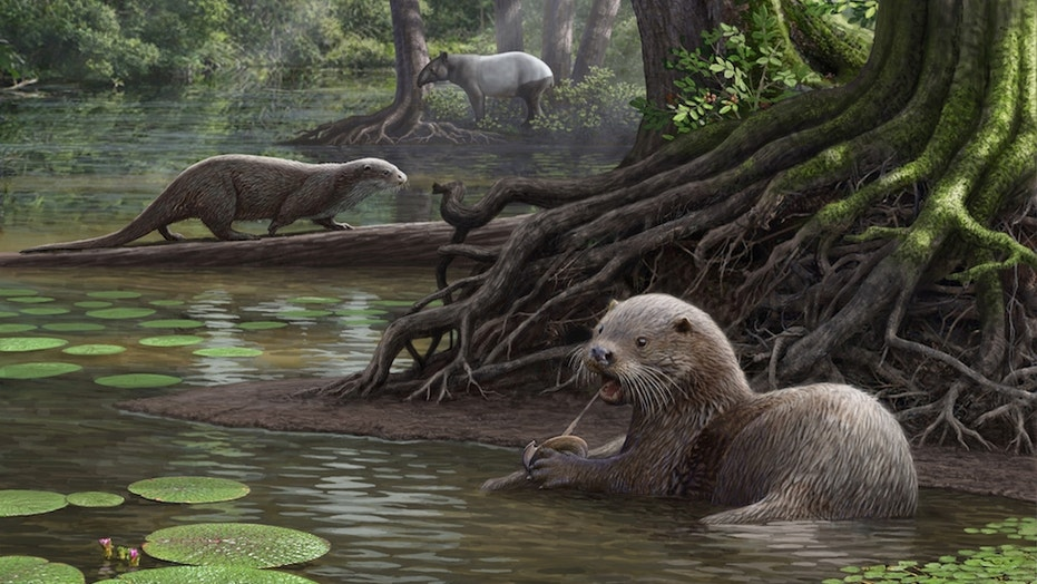The wolf-size otter lived in a shallow swamp surrounded by thick vegetation.