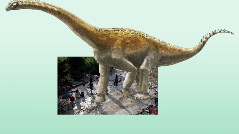 An illustration of the Plagne sauropod superimposed on its tracks.