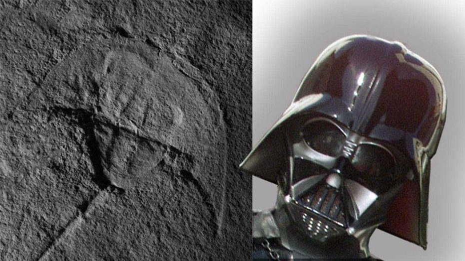An image of the first fossil horseshoe crab from the Triassic North America, alongside an illustration of Darth Vader. (Credit:  New Mexico Museum of Natural History and Science in Albuquerque  and Alex Vros)