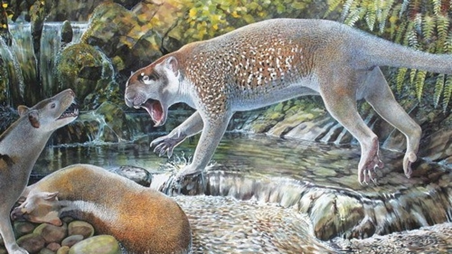 Reconstruction of Wakaleo schouteni challenging the thylacinid Nimbacinus dicksoni over a kangaroo carcass in the late Oligocene forest at Riversleigh (illustration by Peter Schouten in the Journal of Systematic Palaeontology).
