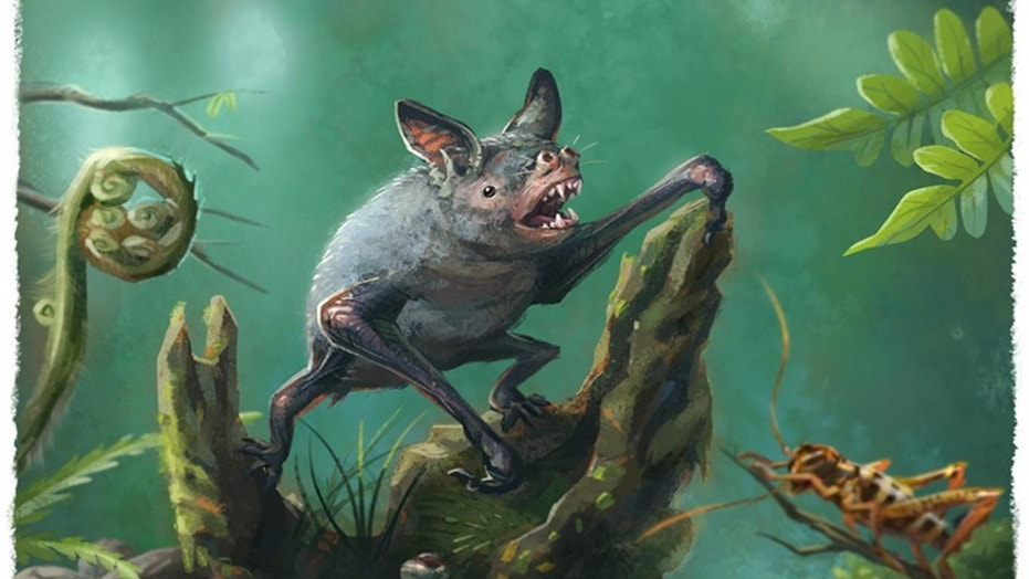 Giant extinct bat burrowing bat fossil discovered in New Zealand