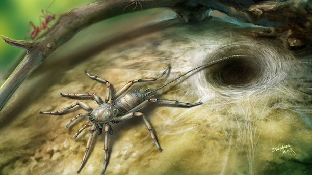 100 million year old spider