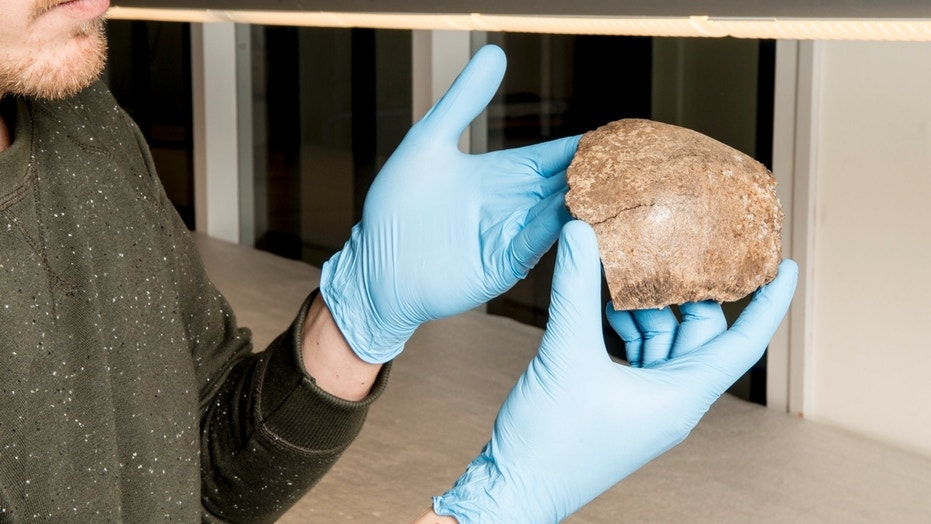 This 13,000-year-old skull fragment found in the North Sea is thought to have come from a hunter-gatherer woman between the ages of 22 and 45.