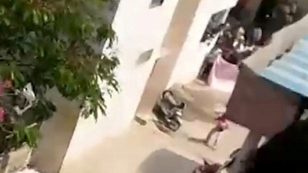 Leopard strays into a housing colony, injures 3 people