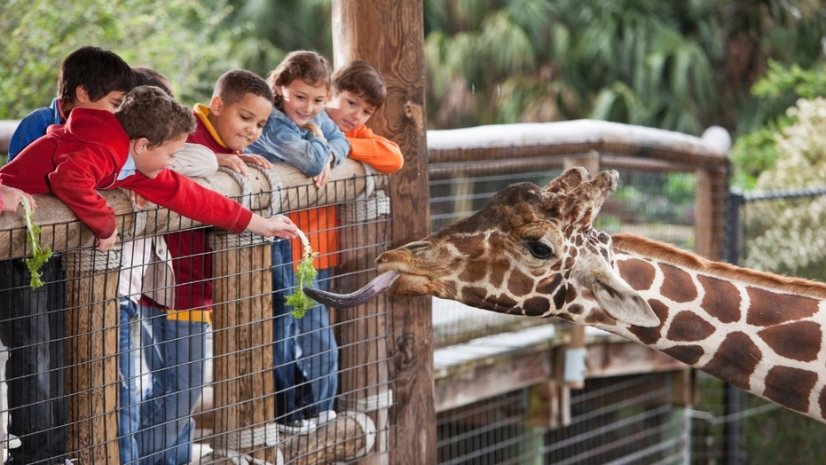 No animals will be allowed to be transferred from the zoo until the end of the year to prevent the spread of TB.