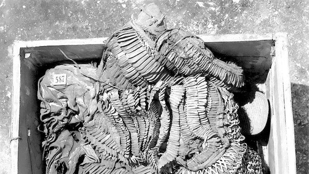 "Nineteen twenties photograph of the cuirass recovered from the tomb of Tutankhamun. See NATIONAL story NNTUT.  Tutankhamun was a battle-hardened warrior and not merely a sickly boy-king, new research suggests.  See NATIONAL story NNTUT.  Specialised photography uncovered signs of battle scars wear on the 18-year-old pharaoh's 3000-year-old war leather armour.  A University of Northampton researcher worked with a TV crew during the filming of a Channel 5 documentary to recreated Tutankhamun's armour.  It was buried within the famous pharaoh's tomb and the findings contradicts past theories of King Tut's 'feeble image' as a dreamer and philosopher.  The researchers used a technique known as Reflectance Transformation Imaging to examine the battle armour's secrets.  The relatively new technique involves merging several images of an object photographed under different lighting angles.  Researcher Lucy Skinner, said: ""It was possible to see abrasion along the edges of the leather scales, meaning that the armour had seen considerable use.  ""That suggests that Tutankhamun had worn it, and that perhaps he had even seen battle.  ""If this is true, it would be an amazing revelation, countering the idea that Tut was a weak and sickly boy-king."""