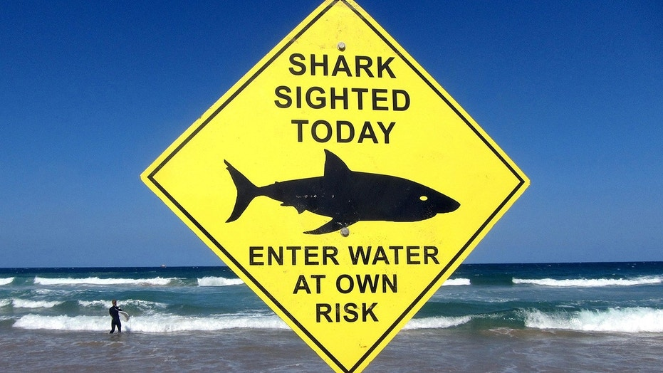 Margaret River Pro cancelled amid shark fears