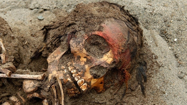 The remains of a child are seen Part of the 42 children and 74 camelids who were sacrificed about 800 years ago in the fishing town of Huanchaquito, Trujillo, September 13, 2011. Archaeologists have unearthed the remains of 42 children and 74 camelids, who were part of a massive sacrifice of pre-Inca Chimu culture for the fertility of the ocean and the country, and it represents the most important discovery related to human and human life animal victims of the Chimu culture in terms of the number of people excavated, according to Oscar Gabriel Prieto, chief archaeologist of the archaeological project. Reception September 13, 2011. REUTERS / Mariana Bazo (PERU - Tags: RELIGION SCIENCE TECHNOLOGY RELATIONS) - GM1E79G0I5F01