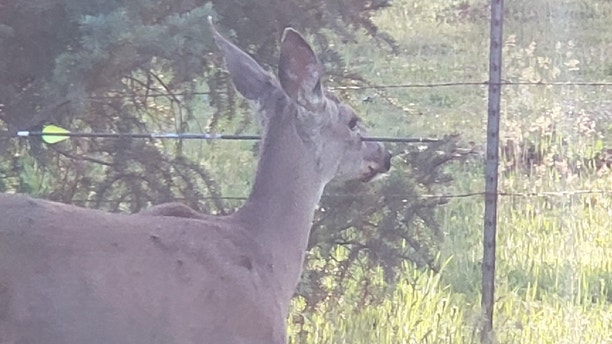 Oregon Deer 3
