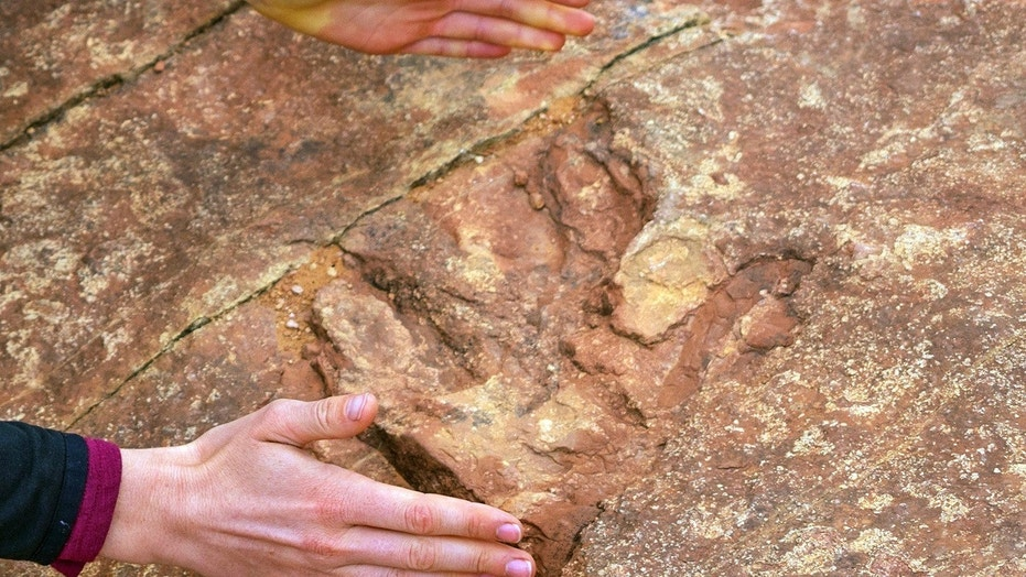 Visitors at Red Fleet State Park are unknowingly throwing rocks covered in dinosaur tracks into a nearby lake.