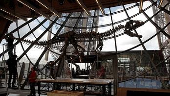 Workers reconstruct dinosaur fossil at the Eiffel tower, in Paris, France, June 2, 2018 ahead of its auction on Monday. REUTERS/Philippe Wojazer - RC1AB3D18DC0
