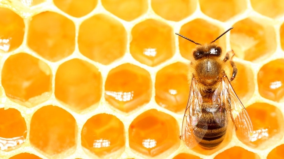 Bee and Honeycomb  (Antagain) (Credit: iStock)