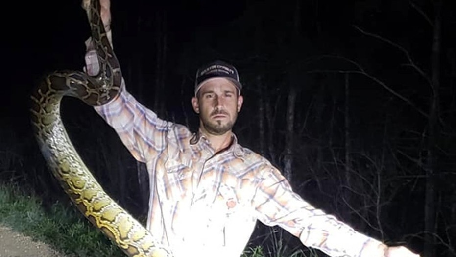 Mike Kimmel holds up 10-foot python he removed from the body of an alligator in Florida.