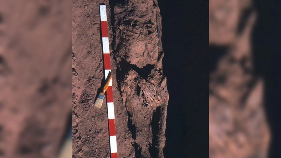 This image show the mummy of an ancient Egyptian man in his 50s who had rectal cancer. Credit: Image courtesy El Molto