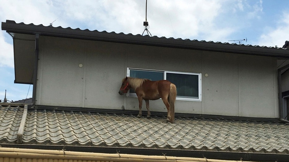 horse stranded on a rooftop after torrential rain, is pictured in Kurashiki, Okayama Prefecture, Japan July 9, 2018. Picture taken on July 9, 2018. @Peace Winds Japan/Handout via REUTERS