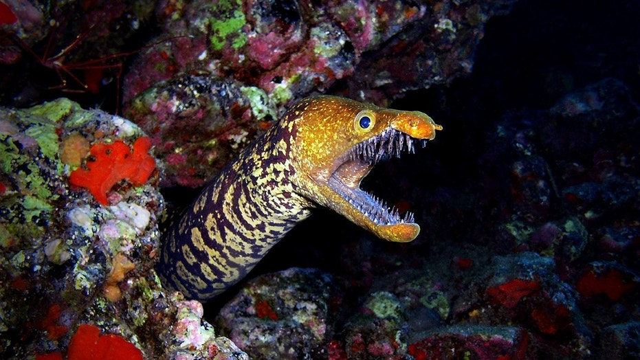 A Maryland woman was likely bitten by a moray eel off the coast of Hawaii on July 29, 2018.