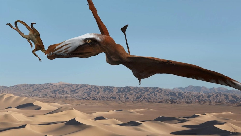 An artist's interpretation of the newfangled pterosaur snacking on a primitive crocodylomorph known as a sphenosuchian. Credit: Josh Cotton