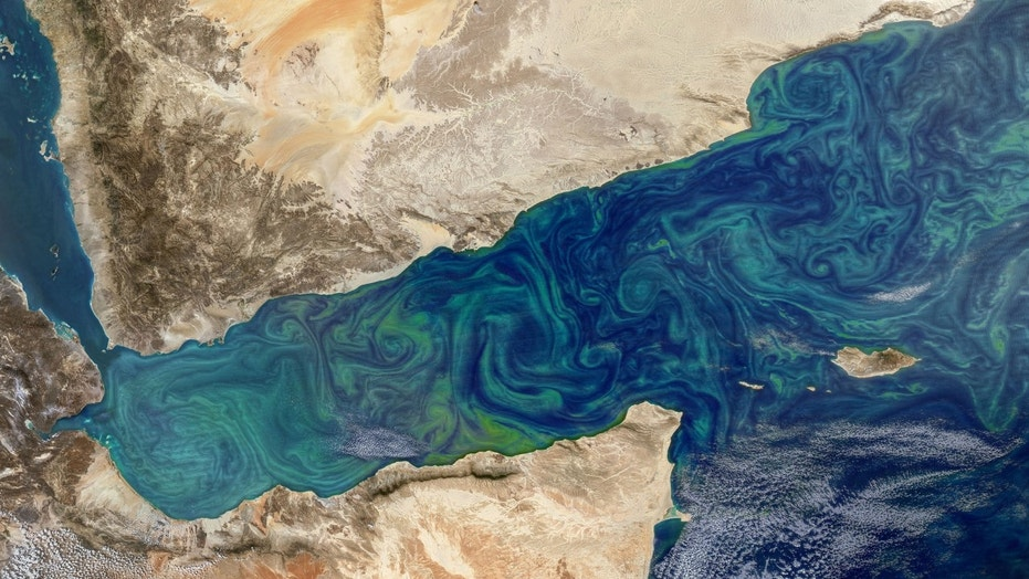 Phytoplankton blooms can sometimes be seen from space, as in this image from the Gulf of Aden, shown here in an image taken by the MODIS instrument on NASA's Aqua satellite. (Credit: NASA's Earth Observatory)