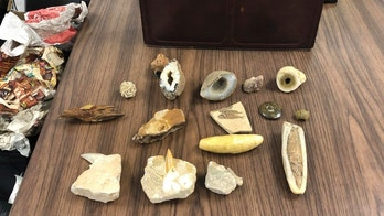 This undated photograph provided by the Mobile Police Department in Mobile, Ala., shows some of the contents of a briefcase that was found by a citizen and turned in to officers recently. Investigators are trying to locate the owner of the case, which included other items including what appeared to be ancient fossils. (Mobile Police Department via AP)