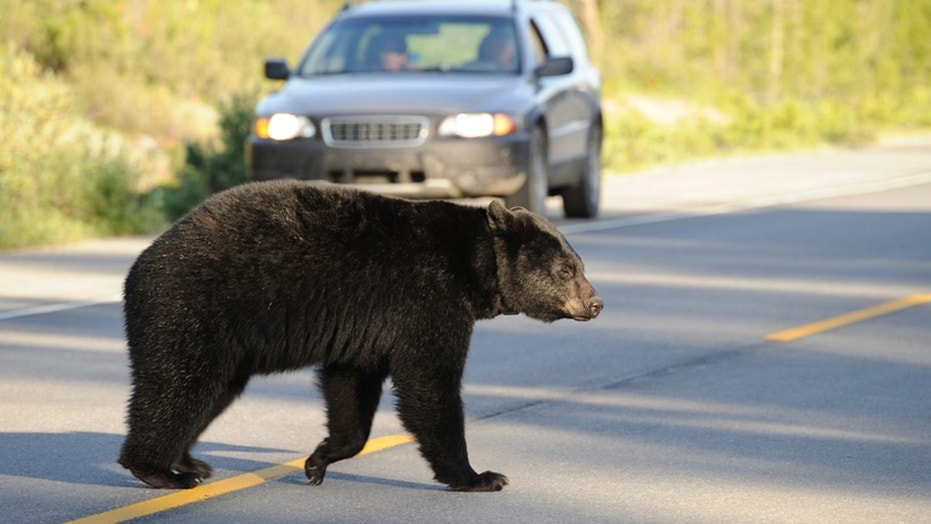 A North Carolina woman said a bear had prevented her from getting her parcel in time.
