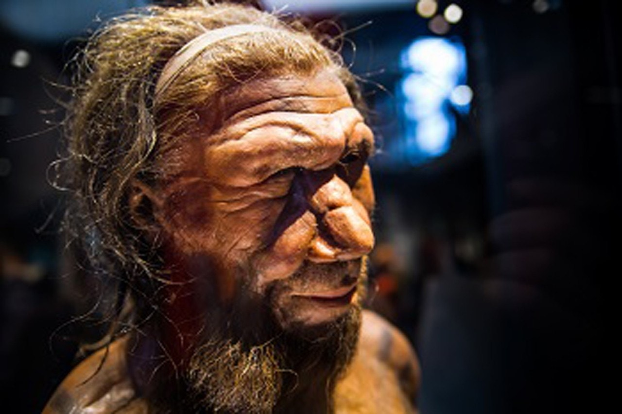 Climate change killed off Neanderthals, study says