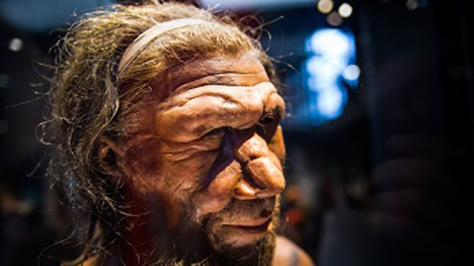 Neanderthals Became Extinct Because of the Cold Climate