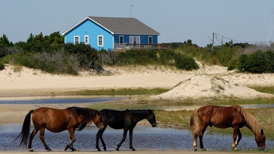 As North Carolina braces for Hurricane Florence, some tourists and residents are worried about the famous wild horses that roam the Outer Banks. But Sue Stuska, a wildlife biologist based at Cape Lookout National Seashore, said the horses instinctively know what to do in a storm
