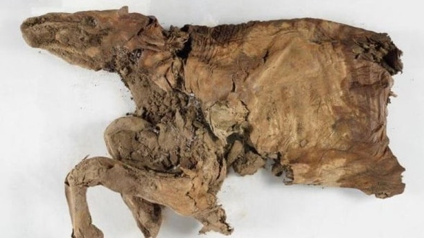 mummified remains 2