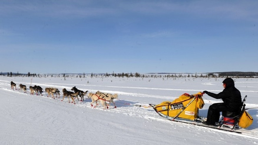 Mar. 12, 2013: Mitch Seavey drives his dog team towards Nome, Alaska, after leaving the White Mountain checkpoint.