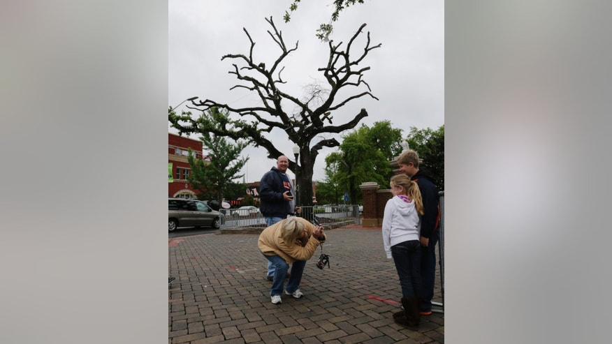"John Shelton, rear, of Trussville, Ala., watches as his wife Rhonda photographs their children, Josie, 8, and Dylan 11 next to one of the poisoned oak trees at Toomer's Corner in Auburn, Ala., Friday, April 19, 2013. The tradition of ""rolling"" the trees at Toomer's Corner following a win by the football team is coming to an end with one final celebration involving the poisoned oaks. Auburn fans will roll the trees Saturday following the spring football game and officials will take down the dying trees the following Tuesday. (AP Photo/Dave Martin)"