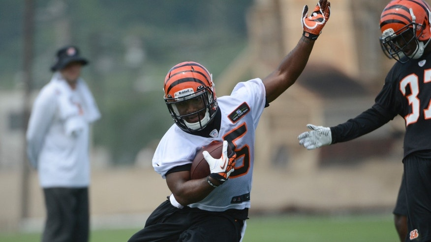 Cincinnati Bengals rookie running back Giovani Bernard carries the ball during an NFL football team practice Tuesday, May 21, 2013 at Paul Brown Stadium in Cincinnati, Ohio.  (AP Photo/Michael E. Keating)